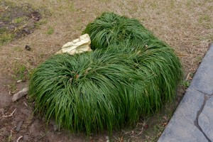 Bridges Park This Grass Sings