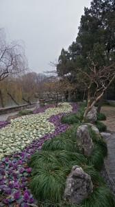 Bridges Park Cabbage Garden 2